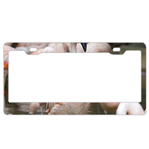SUJQNGC Alumina Chilean Flamingo Zoo Atlanta License Plate Frame,Personalized Home Decoration