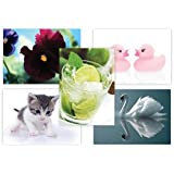 Mix it Up Postcards Great Value Multipack Images Cute, Beautiful & Humour(Without Envelope, Pack of 50)