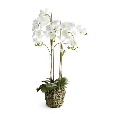 Phalaenopsis Drop in, 44-Inch by Porch & Petal