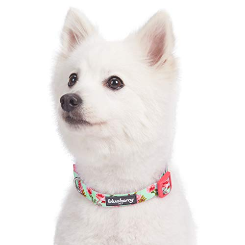 """Blueberry Pet 9 Patterns Spring Scent Inspired Floral Rose Print Turquoise Dog Collar, Medium, Neck 14.5""""-20"""", Adjustable Collars for Dogs"""
