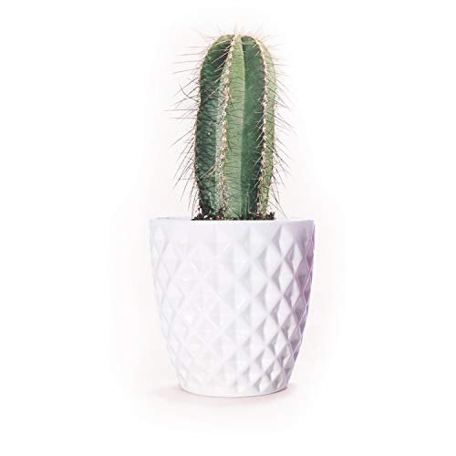 Orchid Pot, 5.5 Inch White Ceramic Flower Pot Aloe Planter Cactus Plant Container Diamond Design Indoor Planter by Forward