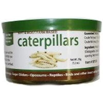 2 PACK CANNED CATERPILLARS HIGH PROTEIN FOOD