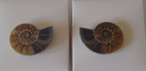 * Ammonite Fossil pair *