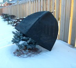 garden crop cold protector