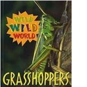 Wild Wild World - Grasshoppers pdf