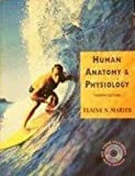 Human Anatomy and Physiology, Marieb, Elaine N., 0805351175
