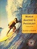 Human Anatomy and Physiology, Marieb, Elaine N., 0805351175