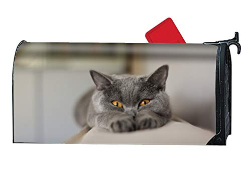 BABBY Magnetic Mailbox Cover - Animal Cat Chartreux Funny Gray, Decorative Vinyl Mailbox Wrap for Standard Size - Welcome Home by BABBY