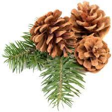 12 Ponderosa Decorative 3-5 Pine Cones UNSCENTED Fall Winter Holiday Home Decor Vase Bowl Filler Displays Crafts