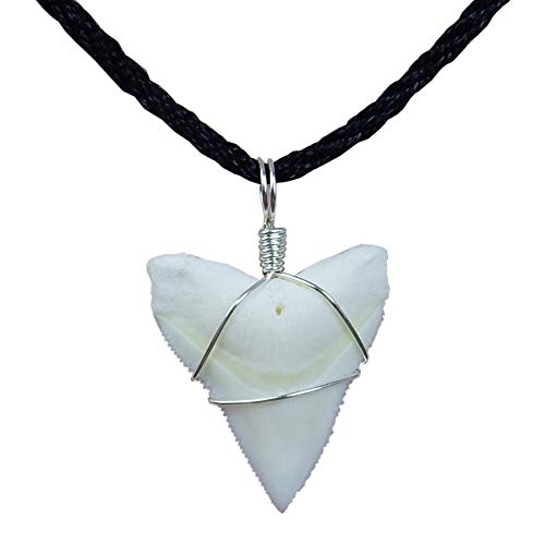 (GemShark Real Bull Shark Tooth Necklace Sterling Silver Charm Pendant for Boys Girls Unisex (0.8 inch Bull Silver))