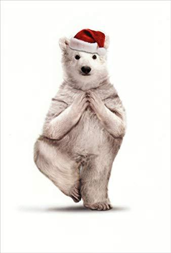 Amazon.com : Zoo Yoga Polar Bear Humorous/Funny Nobleworks ...