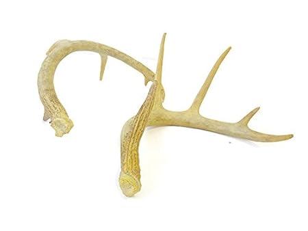 Amazon.com: near y ciervos Faux Taxidermia Antler Shed Fake ...