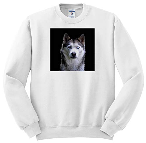 Sven Herkenrath - Animal - Portrait of a Serious Looking Cavalier King Charles Spaniel Dog - Sweatshirts - Youth Sweatshirt XS(2-4) ()