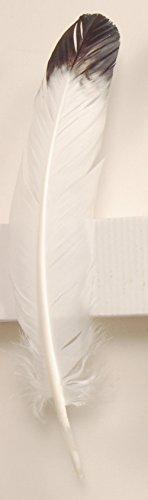 Alterras - Räucher-Zubehör: Truthahnfeder weiß mit Spitze