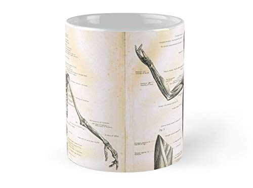 (19Th Century Anatomy Illustration Parts Of A Human Skeleton 11oz Mug - Best gift for family friends)