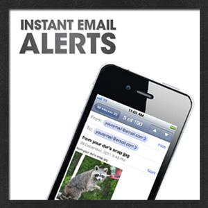 Instant Email Alerts If Activity Detected