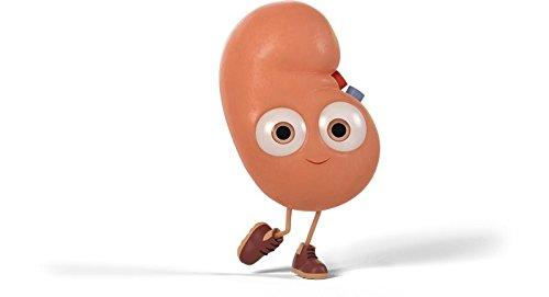 Bladder Health Supplement - Kidney Support Complex - Bladder Support for Men - 6 Bottles 360 Capsules by PL NUTRITION (Image #7)
