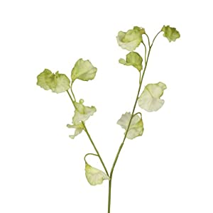 BELLAFIORA 01AMAZ045729 Artificial Sweet Pea Flowers 50 cm Green 109