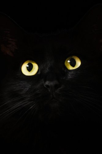 Black Cat With Yellow Eyes: 6X9 Cat Eyes -
