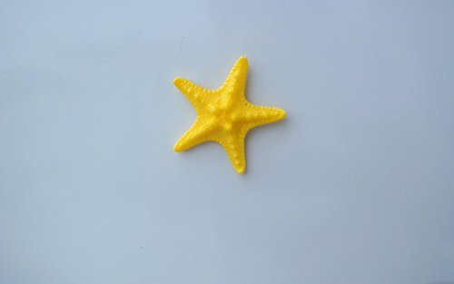 Lorigun Artificial Starfish Simulation Sea Animals Home Resin Furnishings Ocean Theme Wall Decoration Small Star 4Pcs