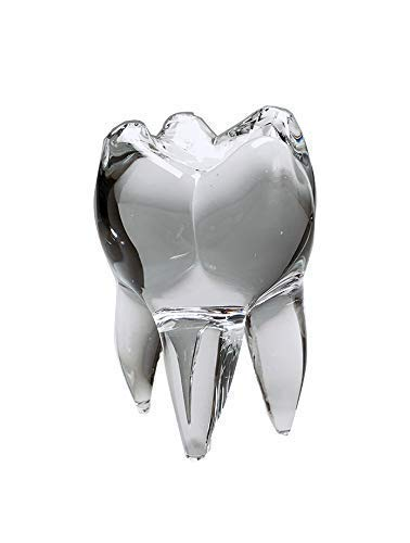 The Original Wisdom Tooth Glass Sculpture