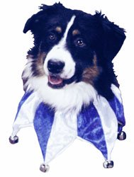 Jb Wholesale Pet Supplies - Hanukkah Star Collar-STAR COLLAR MEDIUM