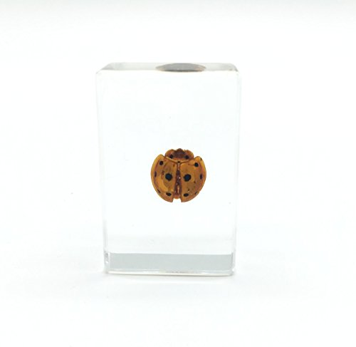 """Ladybug(Ladybird) Paperweight Specimen Paperweight for Science Education for Book for Office for Desk(1.8x1.1x0.8"""")"""