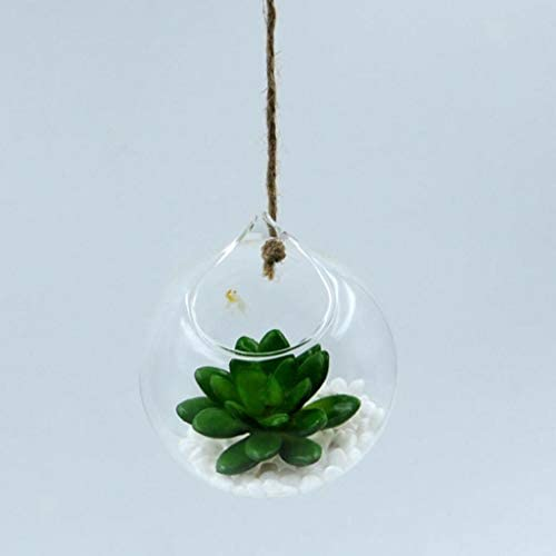 COMFORT INNOVATION 6X Glass Flower Vase Hydroponics Plant Terrarium Bottle for Hanging Decor / COMFORT INNOVATION 6X Glass Flower Vase Hydroponics Plant Terrarium Bottle for Hanging Decor