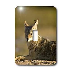- 3dRose LLC lsp_86792_1 Coyote Wildlife Scammons Lagoon Mexico Sa13 Ska0027 Steve Kazlowski Single Toggle Switch