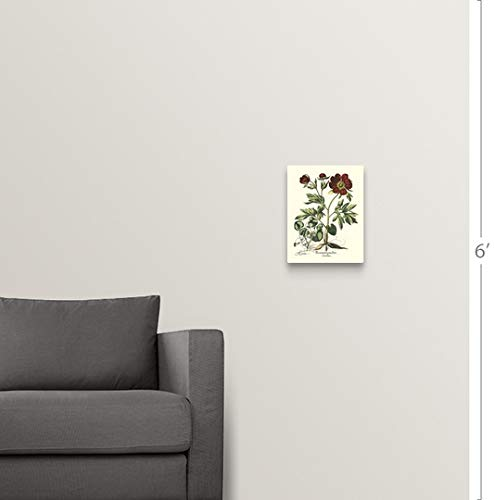 Amazon.com: Basilius Besler Floating Frame Premium Canvas ...
