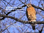 A Photographic Guide to the Birds of Wintergreen, Faintich, 0615310265