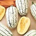 Delicata Winter Squash Seeds, 25+ Premium Heirloom Seeds, Cucurbita Pepo, Delicious & Beautiful Gourds fantastic for your home garden!, (Isla's Garden Seeds), 90% Germination, Non GMO, Highest Quality
