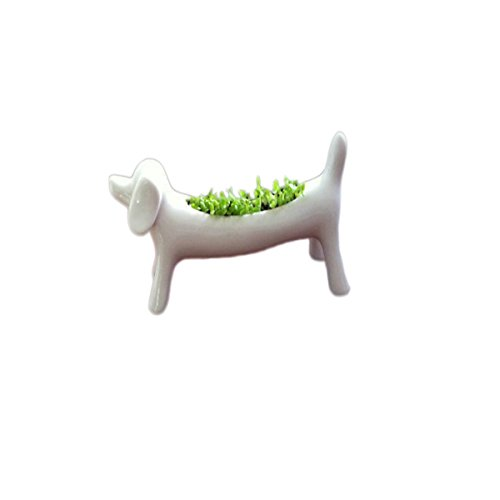 Glovion Miniature Dog Aerobic Desktop Potted Planting Bonsai Oxygen Potted Plant -Desktop Bar Everyday You Can Breathe Fresh Air &Enjoy Cultivation