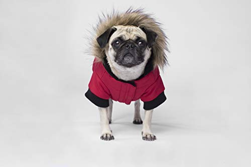 Canada Pooch North Pole Parka, Red, Size 26