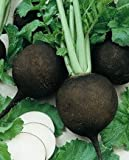 Radish Black Spanish Great Heirloom Vegetable by Seed Kingdom Bulk 10,000 Seeds