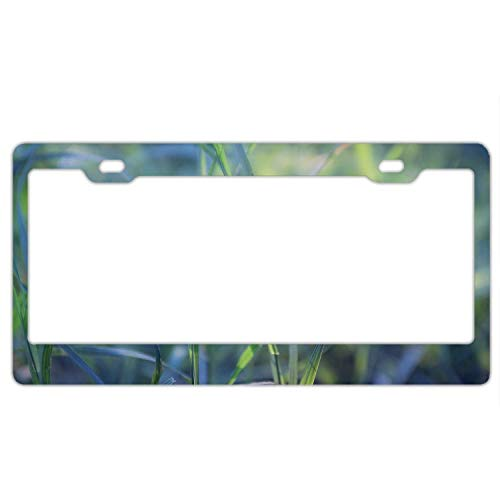Fabri.YWL Abstract Grass Plant Leaves License Plate Frame Car Tag Frame Auto License Plate Holder 12