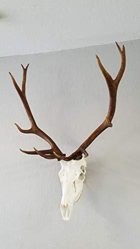 (Top Rack Raging Bull European Mount Hanger)