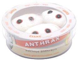 Petri Dish Bacillus anthracis GIANT MICROBES Anthrax