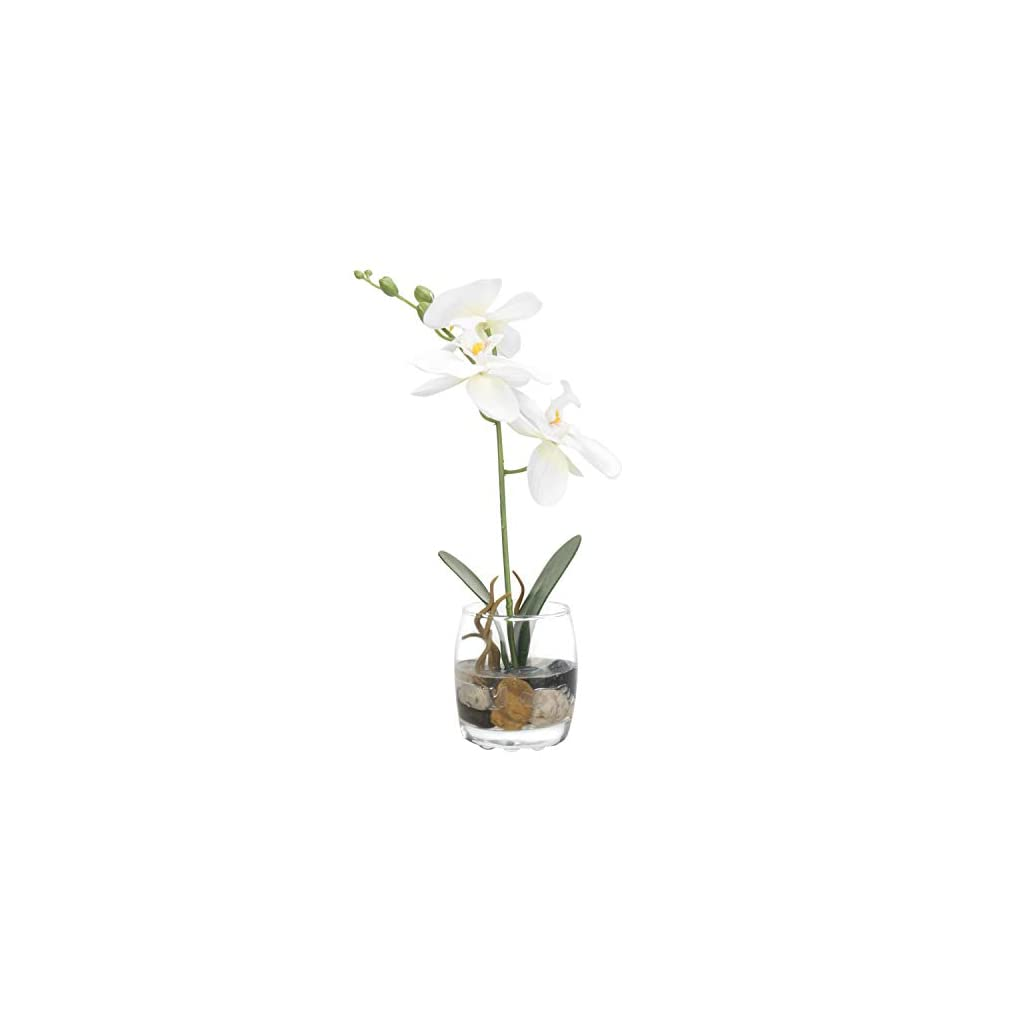 MyGift Mini Synthetic Silk Artificial Phalaenopsis Orchid in Glass Vase, White