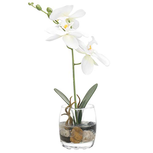 Potted Phalaenopsis Orchid - MyGift Mini Synthetic Silk Artificial Phalaenopsis Orchid in Glass Vase, White