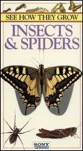 Amazon.com: See How They Grow: Insects & Spiders [VHS ...