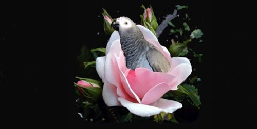 - Airbrush License Plate - Bird in Flower - #5560