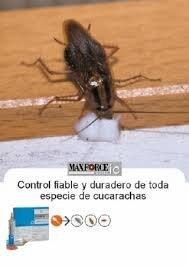 Cucarachas En El Baño | 1 Tubo Maxforce White Ic 30 Gramos Insecticida Potente Gel