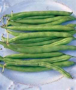 Blue Lake 274 Bush Bean Seed 100 Ct - Blue Lake 274 Bean Snap Shopping Results