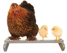 Precision-Pet-RoostBar-Portable-Roosting-Bar-by-Precision-Pet