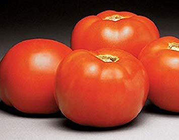 ANVIN Germination Seeds:30 Seeds of Better Vfn Hybrid - Tomatoes Early Season