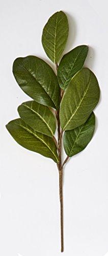 Magnolia Leaves - 3