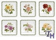 Portmeirion Botanic Roses Square Salad Plate - Set of 6 (Botanic Roses)