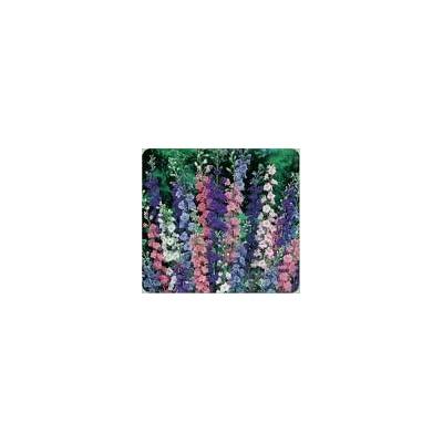 100 Mixed Rocket Larkspur Flower Seeds : Flowering Plants : Garden & Outdoor [5Bkhe0206853]