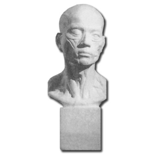 Plaster Casting- Life Sized Human Head and Neck by Masters